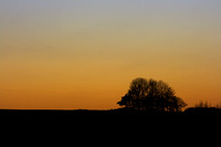 Trees silhouetted on a hillside by the setting sun